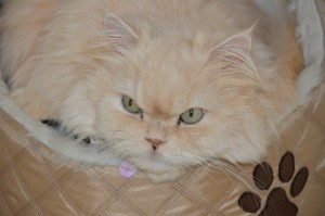 Ozzy, mi gato terapeuta